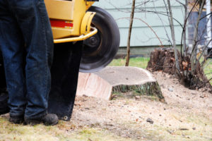 stump grinding in addition to tree dismantling
